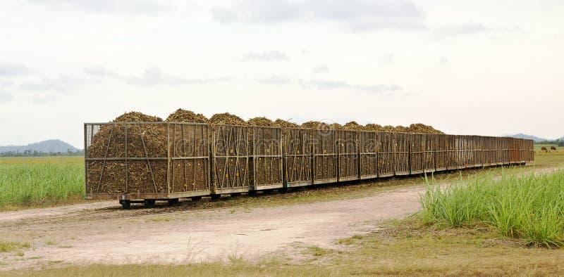 Schienenstauräume voll des frischen Schnittzuckerrohrs stockfotos