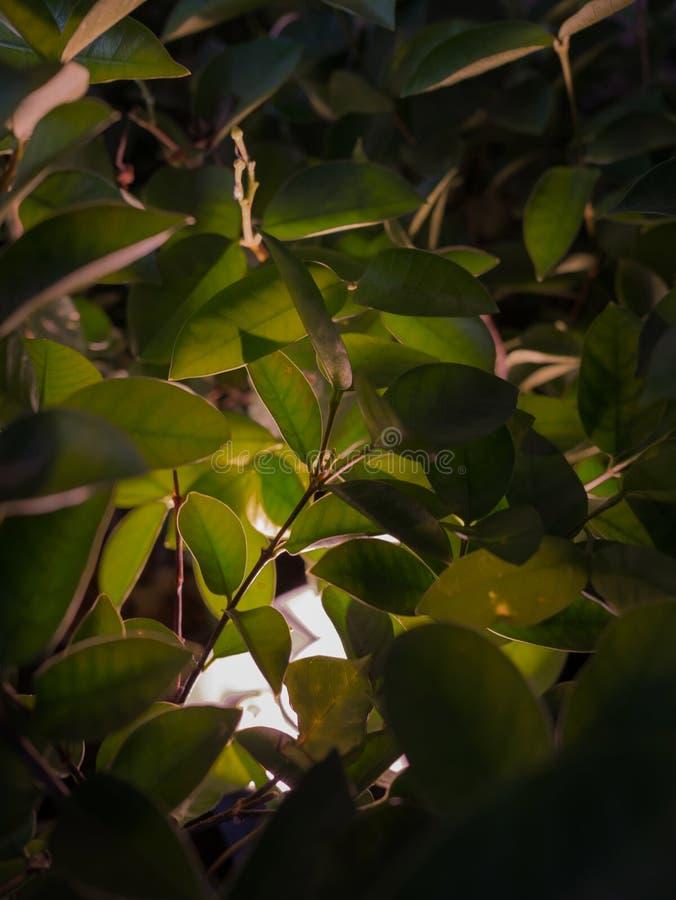 Schijnwerpervlek op bladeren in dark stock foto