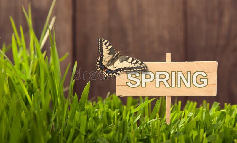 Schild-Frühling auf Grashintergrund von hölzernen Planken, mit frischem grünem Rasen des Schmetterlinges nahe rustikalem Schmutzz stockbild