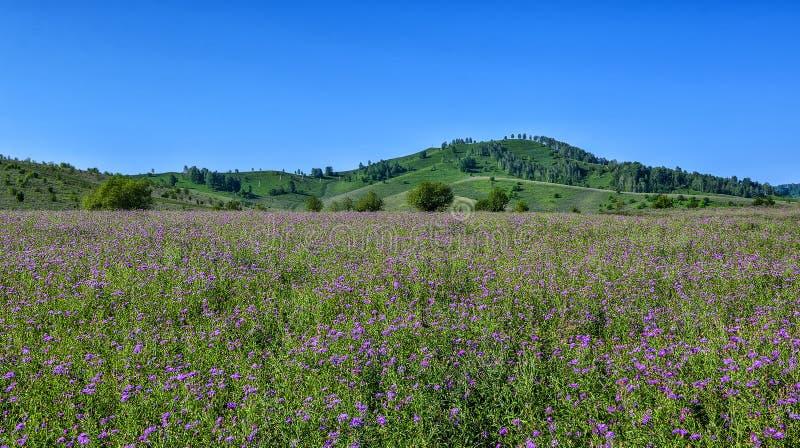 Schilderachtig berg zonnig landschap van bloeiende weide stock foto