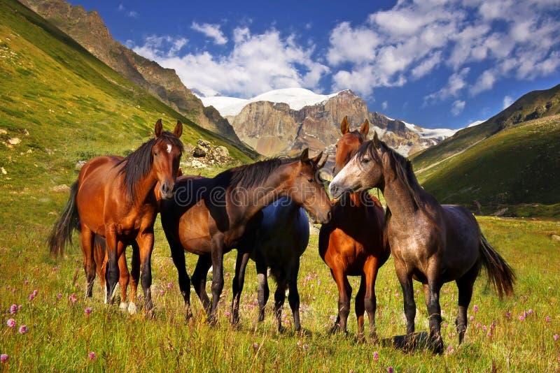 Schilderachtig berglandschap met paarden royalty-vrije stock afbeelding