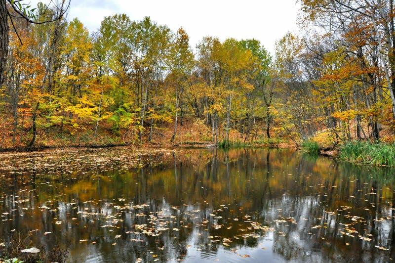 Schilderachtig de herfstlandschap van regelmatige rivier en heldere bomen royalty-vrije stock afbeeldingen