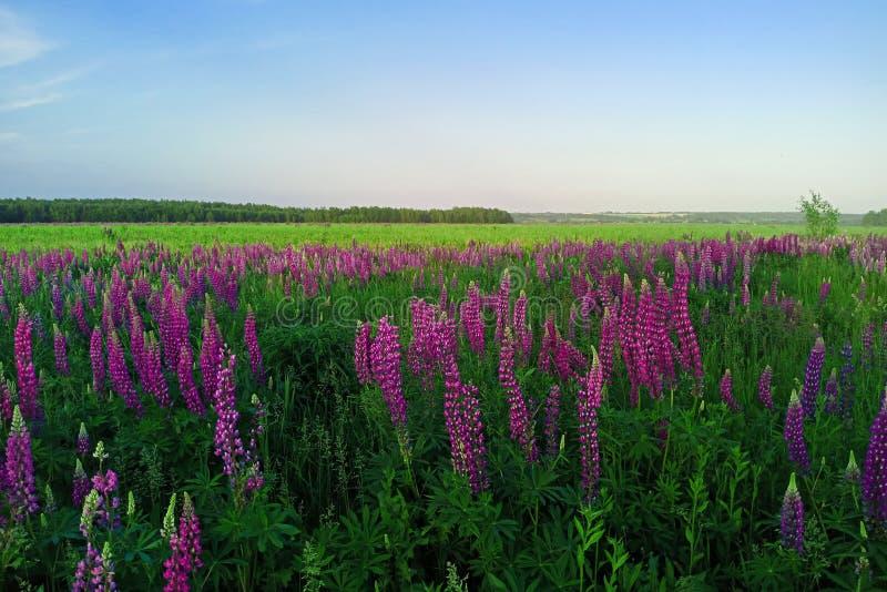 Schilderachtig landschap met bloemen, gebieden en bossen in het platteland stock foto