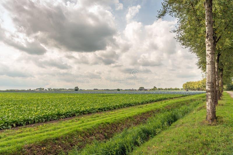 Schilderachtig Nederlands landelijk landschap met de bebouwbare landbouw stock foto's