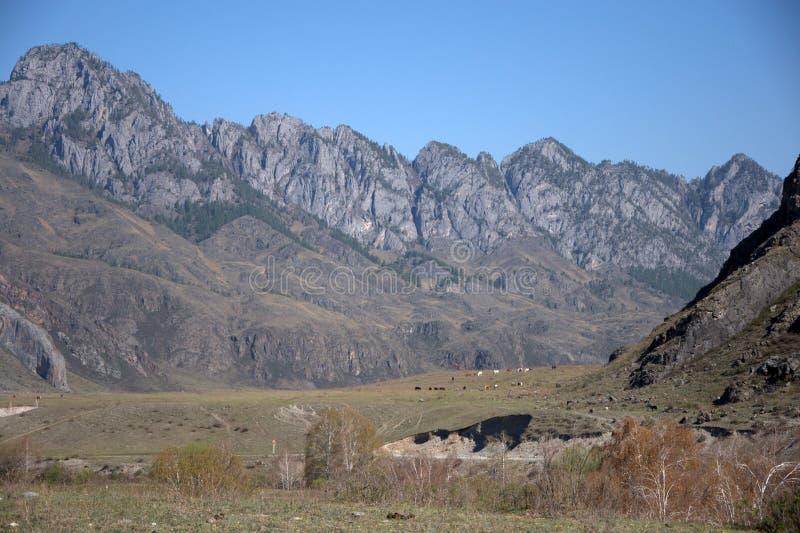 Schilderachtige die vallei door bergketens wordt omringd altai stock foto's