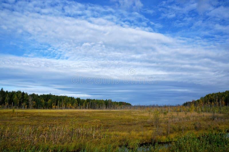 Schilderachtige mening van het moerasland met droog gras en kleine bomen op het tijdstip van de Gouden Herfst stock fotografie