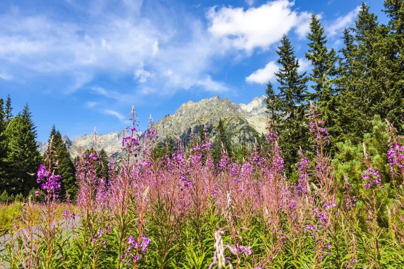 Schilderachtige mening van Tatra-bergen, Slowakije stock afbeelding