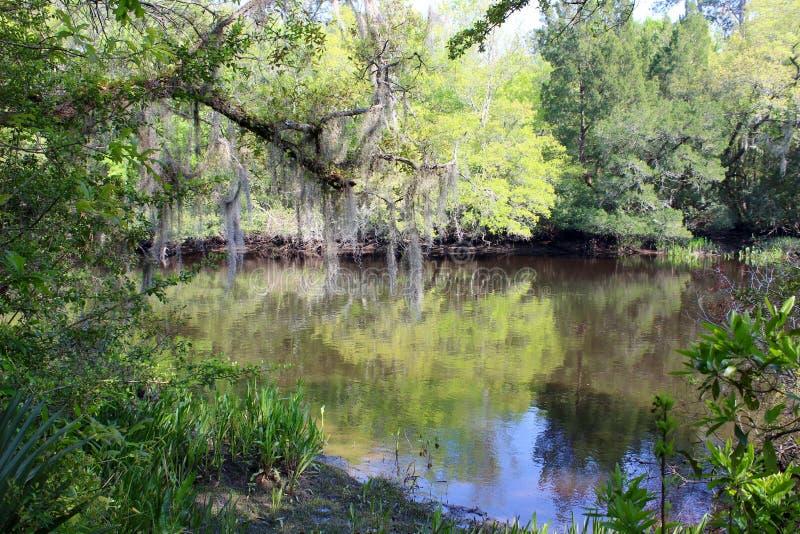 Schilderachtige Riverbank stock foto