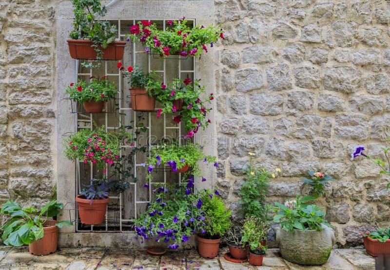 Schilderachtige steenmuur in de straten van een bewaarde middeleeuwse Oude stad met kleurrijke ingemaakte bloemen in Budva, Monte royalty-vrije stock foto's