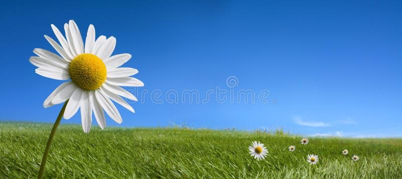 Schilderachtige van het de zomerlandschap en madeliefje bloemen royalty-vrije stock foto's