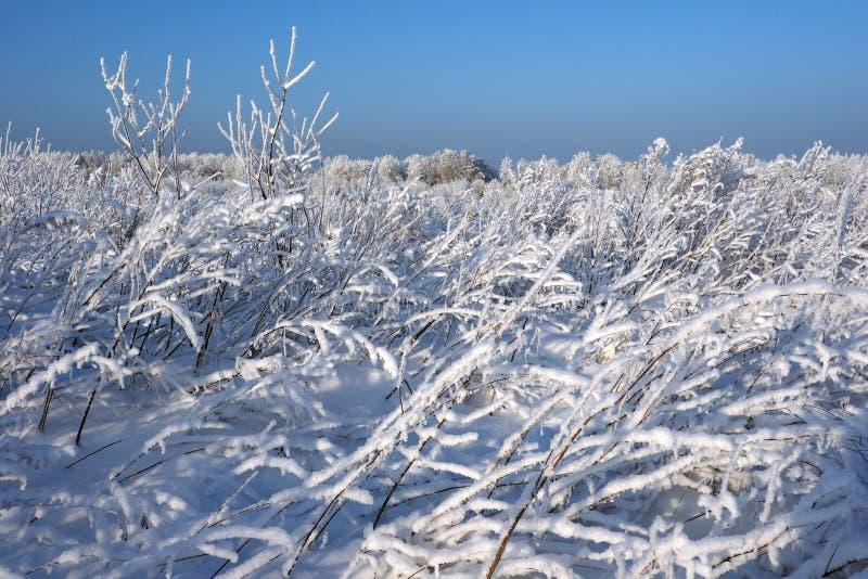 Schilderachtige winterse scène Karpatisch, de Oekraïne, Europa stock afbeelding