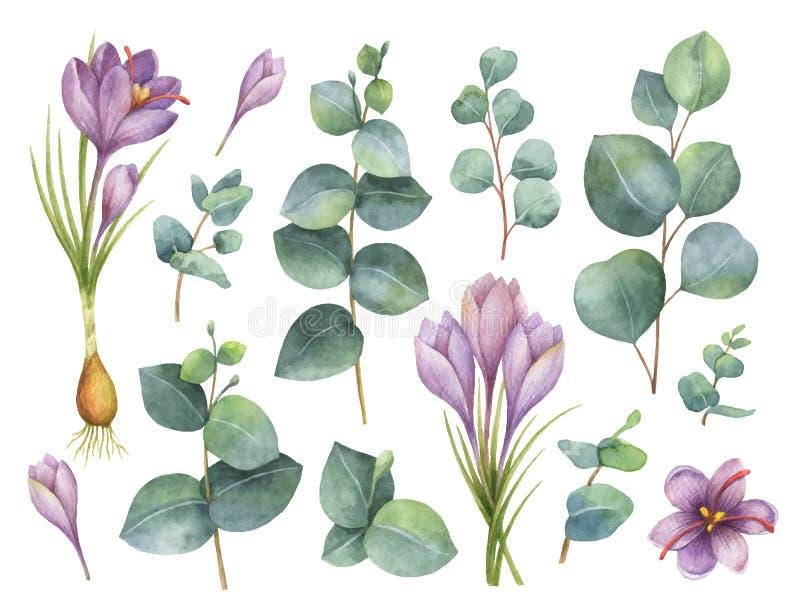 Schilderde de waterverf vectorhand reeks met eucalyptusbladeren en purpere bloemen van saffraan royalty-vrije illustratie