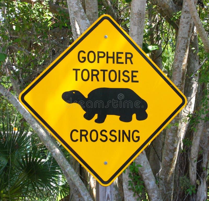 Schildkröteüberfahrt stockbilder