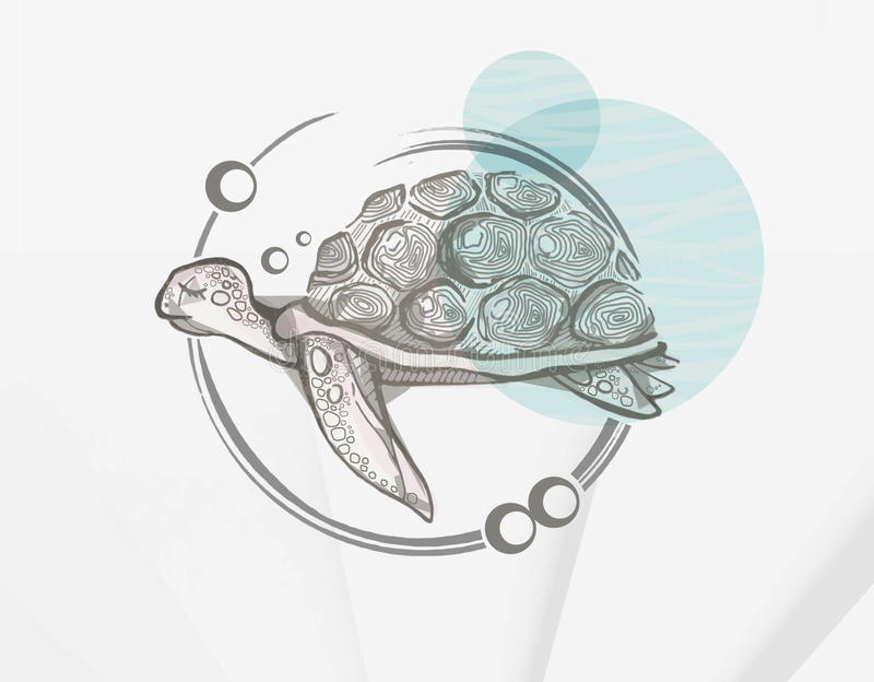 Schildkröte lizenzfreie stockfotos