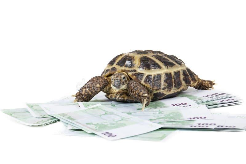 Schildkröte auf dem Geld stockbild