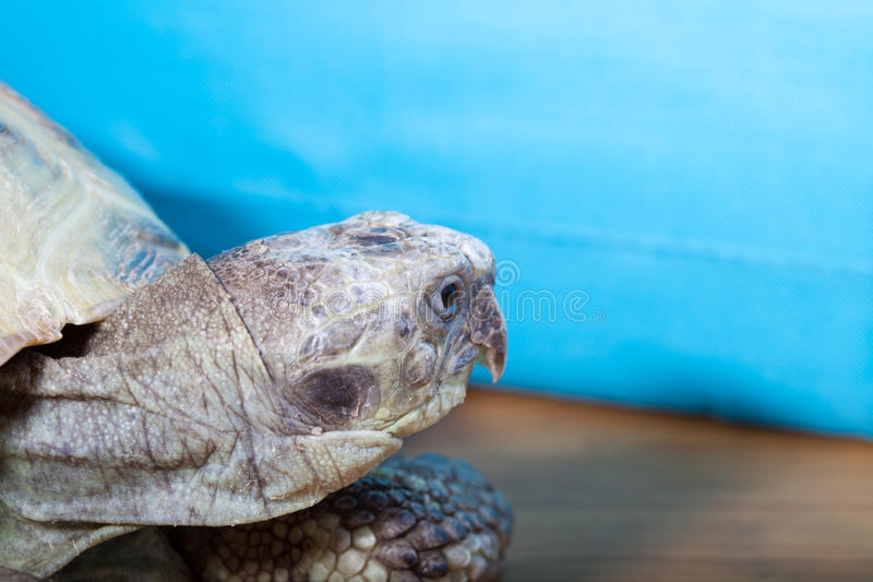 Schildkröte auf dem hölzernen Schreibtisch stockbild