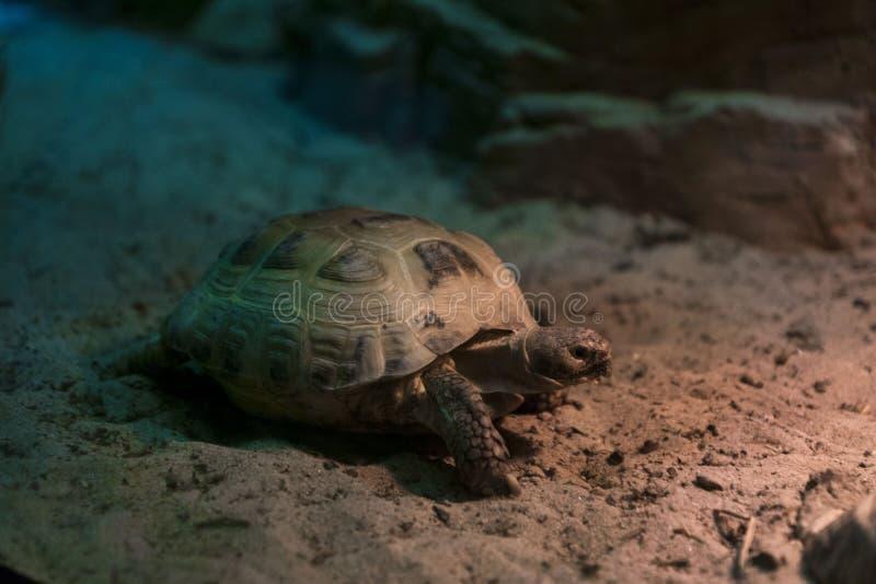 Schildkröte auf dem Sand lizenzfreie stockfotografie