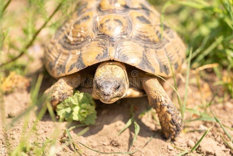 Schildkröte in der Natur lizenzfreie stockbilder