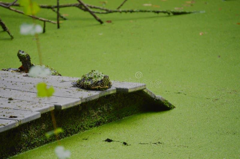 Schildkröte, die Ihnen recht betrachtet! lizenzfreie stockbilder