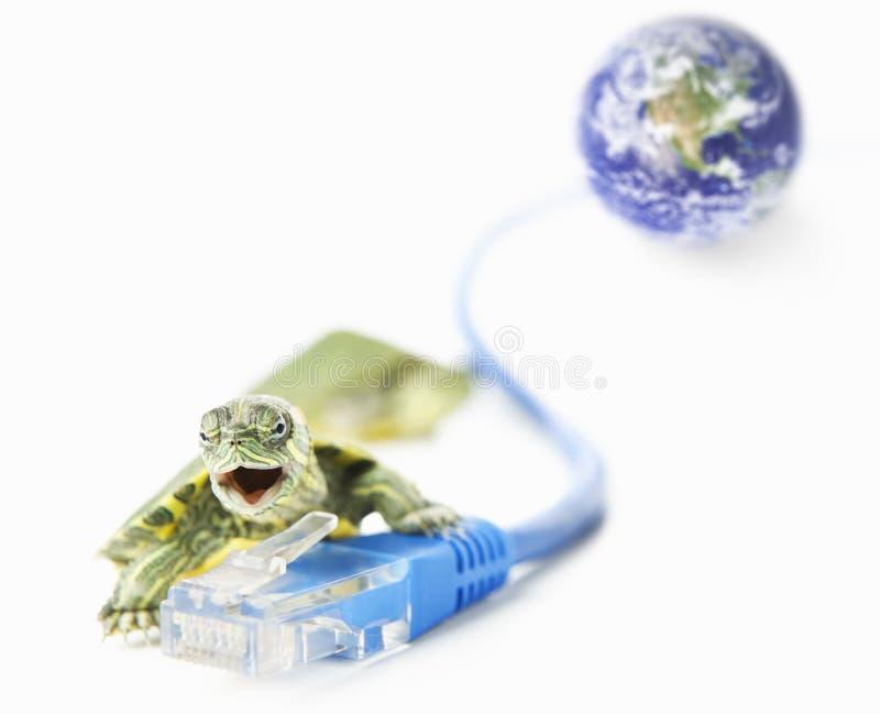 Schildkröte-, Lan-Seilzug und Weltkugel lizenzfreie stockfotos