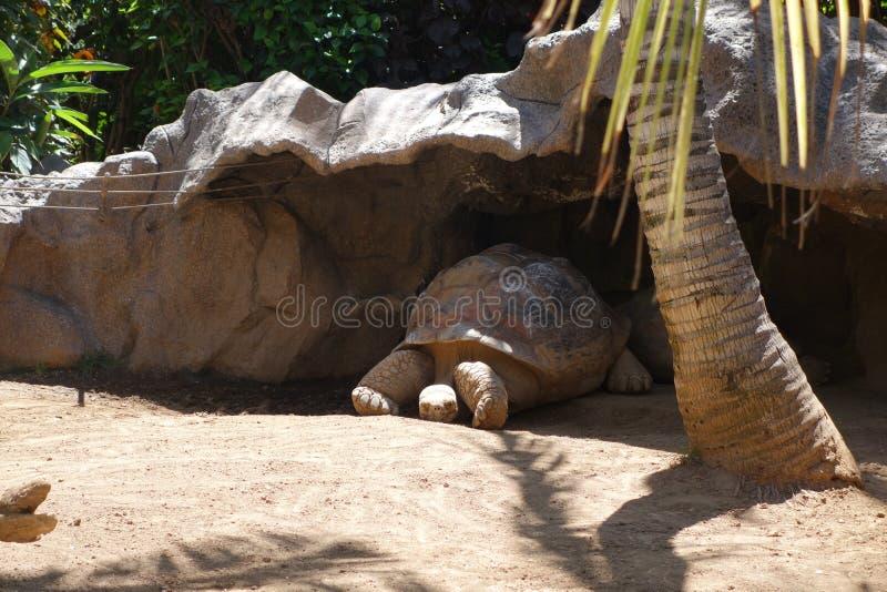 Schildkröte liegt auf dem Sand lizenzfreies stockfoto