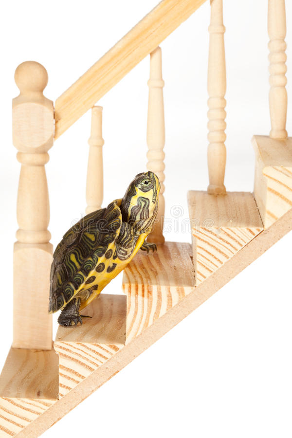 Schildkröte mit Ehrgeiz lizenzfreies stockbild