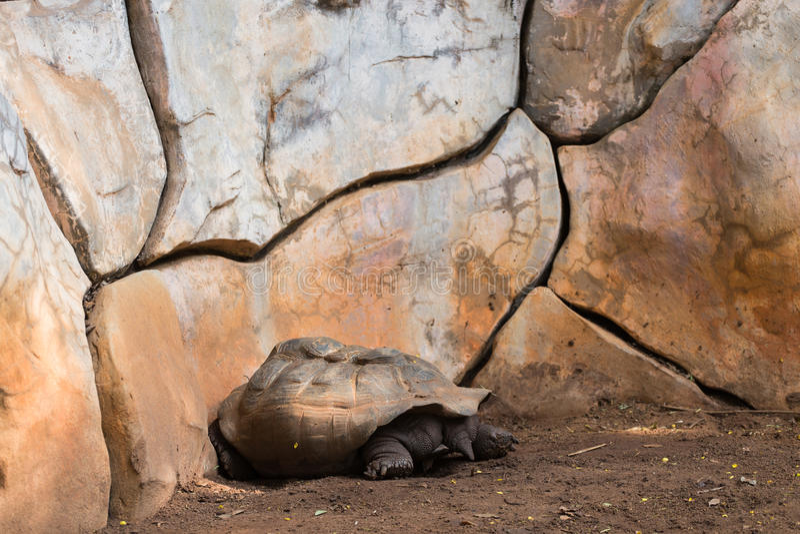 Schildkröte schläft stockfotografie