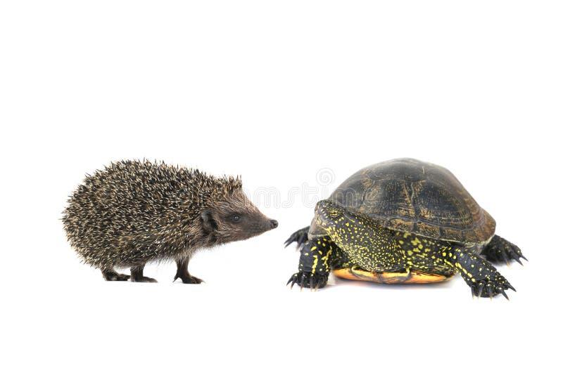 Schildkröte und Igeles lizenzfreies stockfoto
