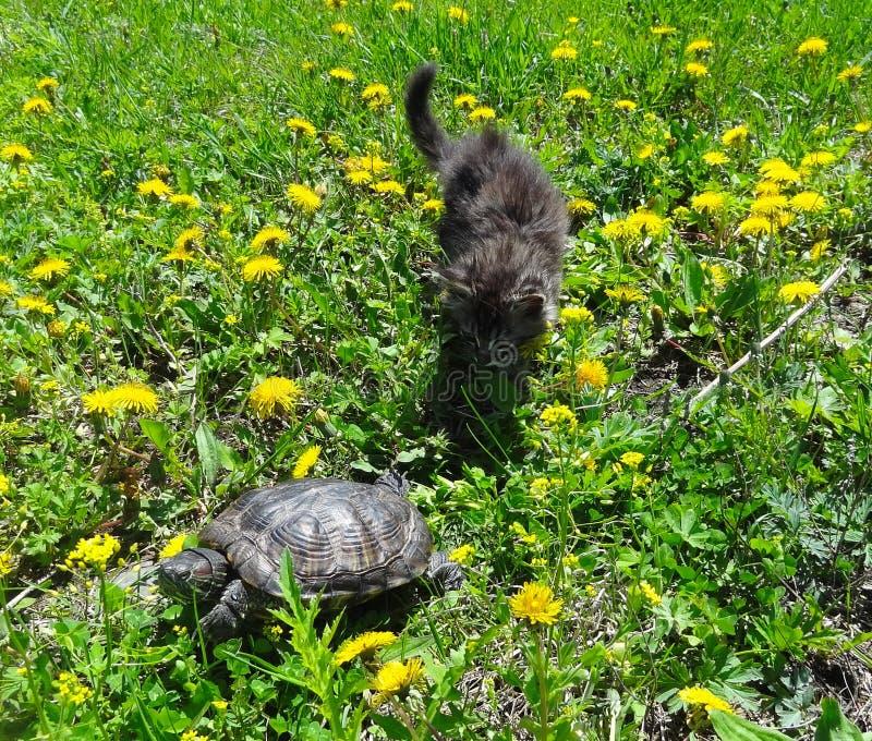 Schildkröte und kleine Miezekatze lizenzfreie stockfotografie