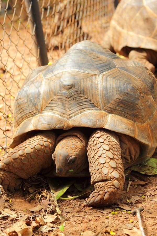 Schildkröten, die in die Natur kriechen stockbilder