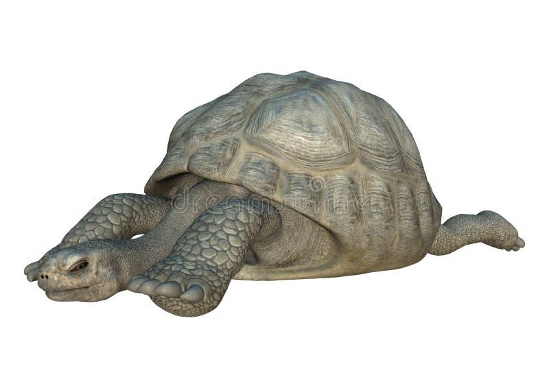 Schildkröten-Galapagos-Schildkröte der Wiedergabe-3D auf Weiß stock abbildung
