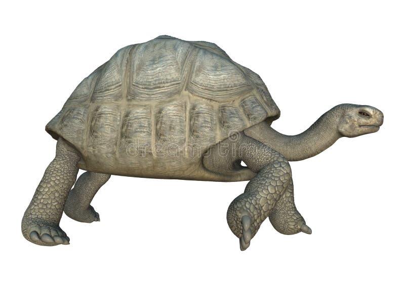 Schildkröten-Galapagos-Schildkröte der Wiedergabe-3D auf Weiß lizenzfreie abbildung