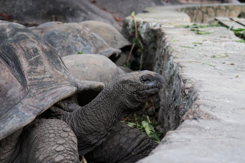 Schildkröten Seychellen stockbild