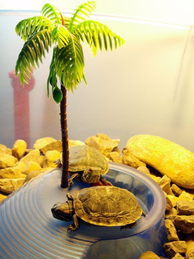 Schildkröten unter einem künstlichen Baum stockfoto
