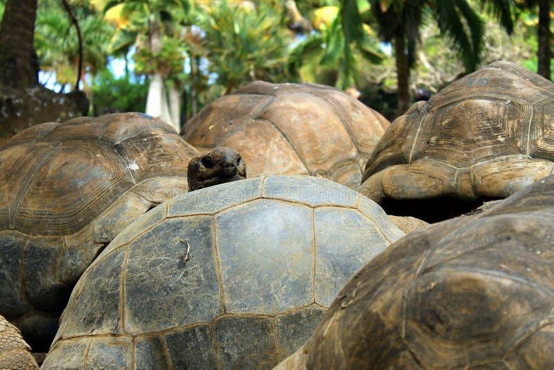 Schildkrötenansicht lizenzfreie stockbilder