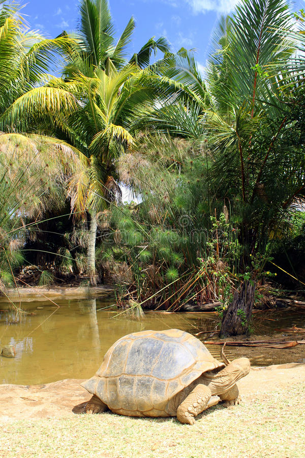 Schildkrötengehen lizenzfreie stockfotos