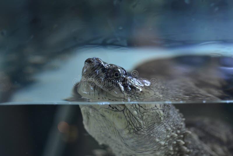 Schildkrötenkopf lizenzfreie stockfotos
