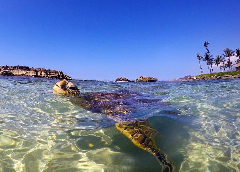 Schildkrötenlagune stockbild