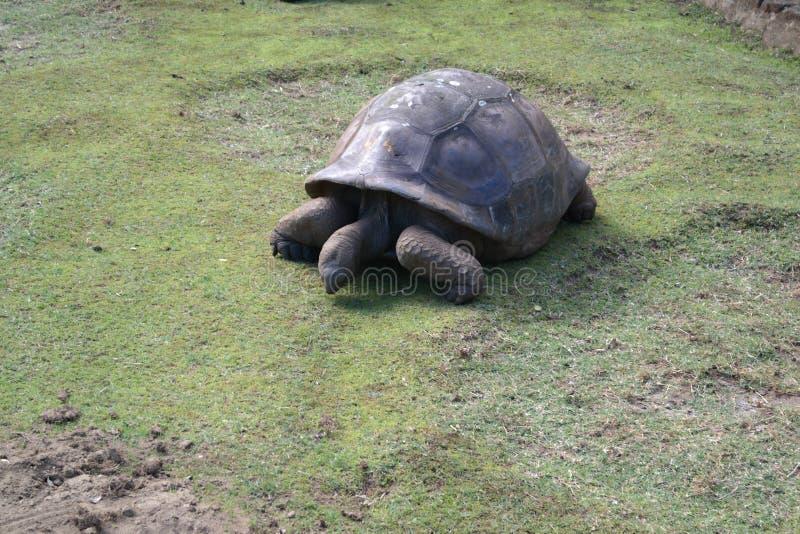 Schildkrötenmahlzeitzeit lizenzfreies stockbild