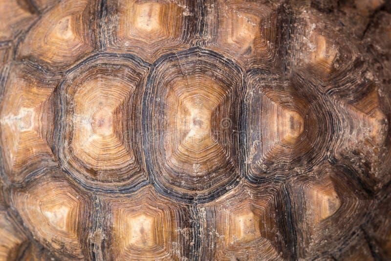Schildkrötenschale lizenzfreie stockfotografie