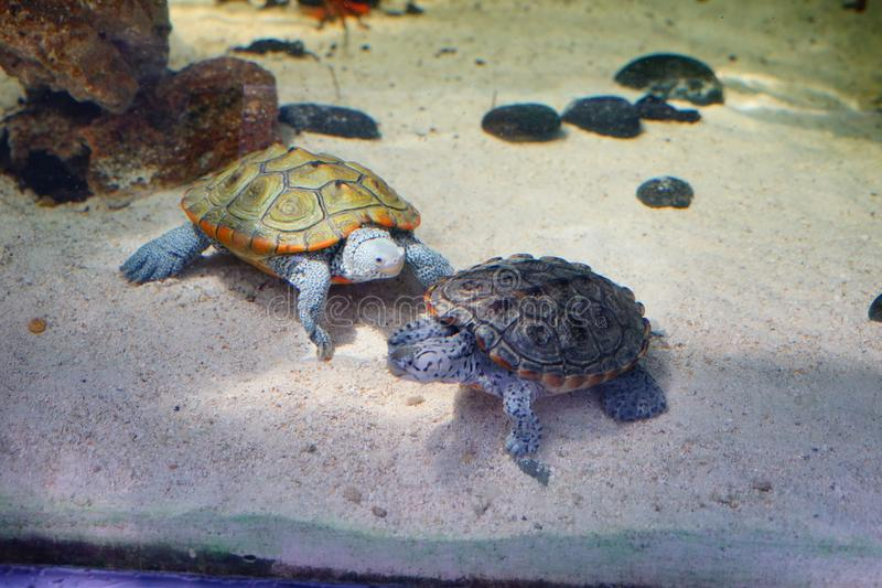 Schildkrötenunterhaltung lizenzfreies stockfoto