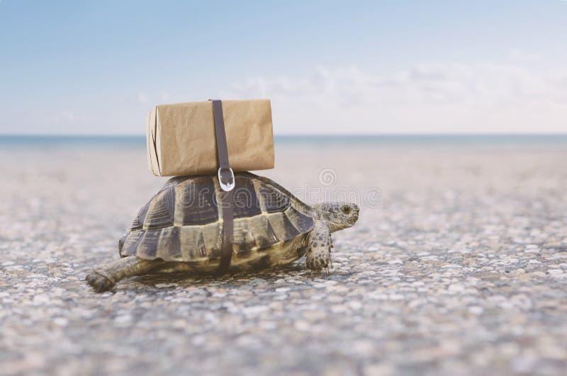 Schildkrötenversandkasten auf der Rückseite stockfotos
