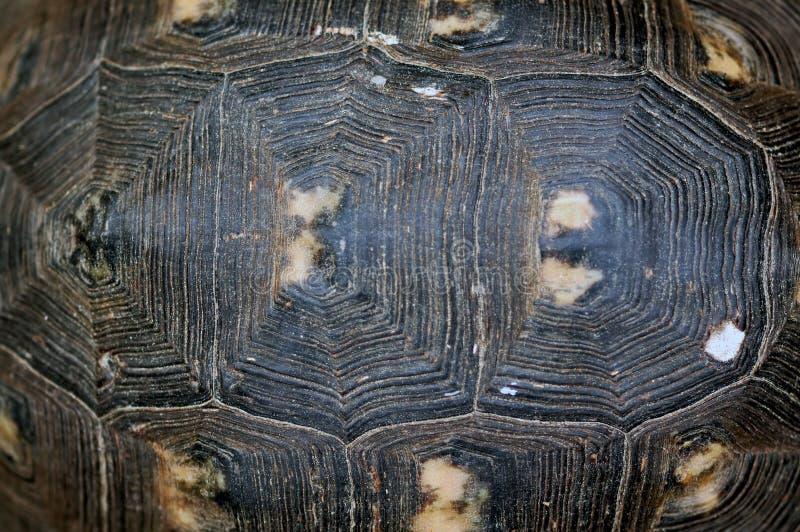 Schildkröteshellbeschaffenheit stockbild