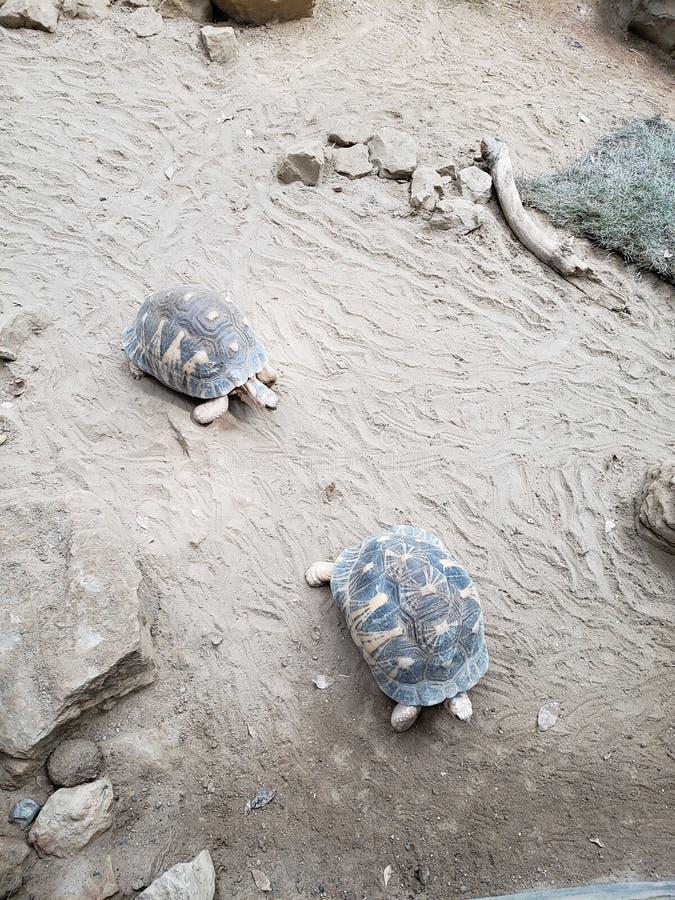 Schildpad bij de dierentuin stock foto's