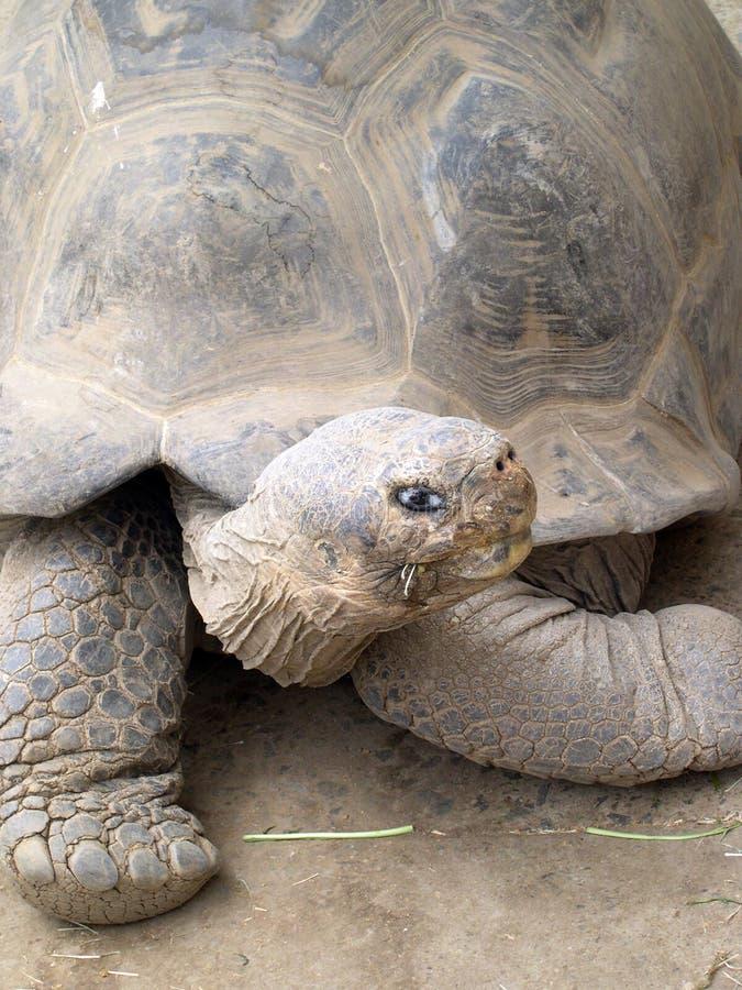 Schildpad bij de Dierentuin van San Diego stock foto