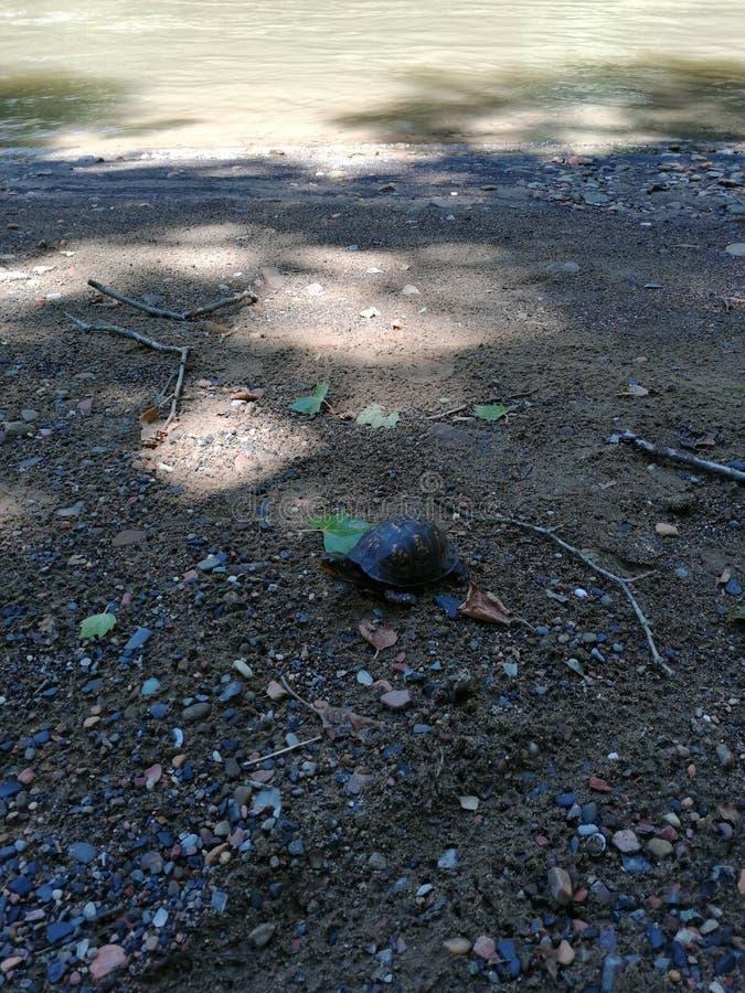 Schildpad bij het park royalty-vrije stock afbeelding