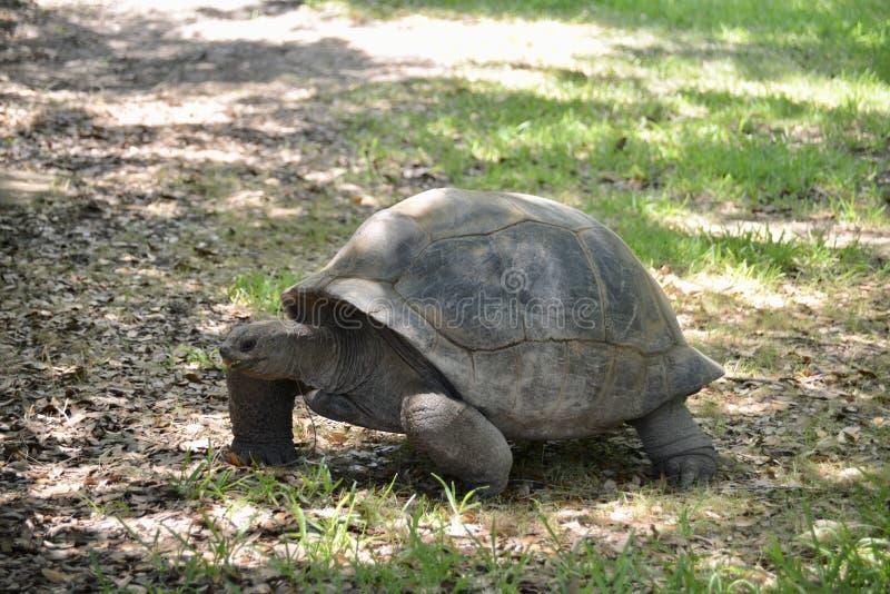 Schildpad in de wildernis stock afbeeldingen