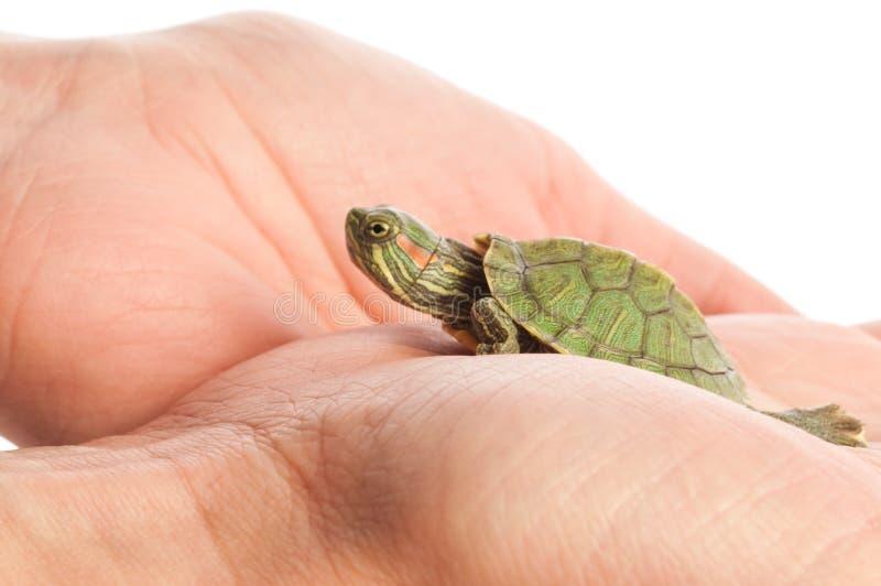Schildpad in een hand stock afbeelding