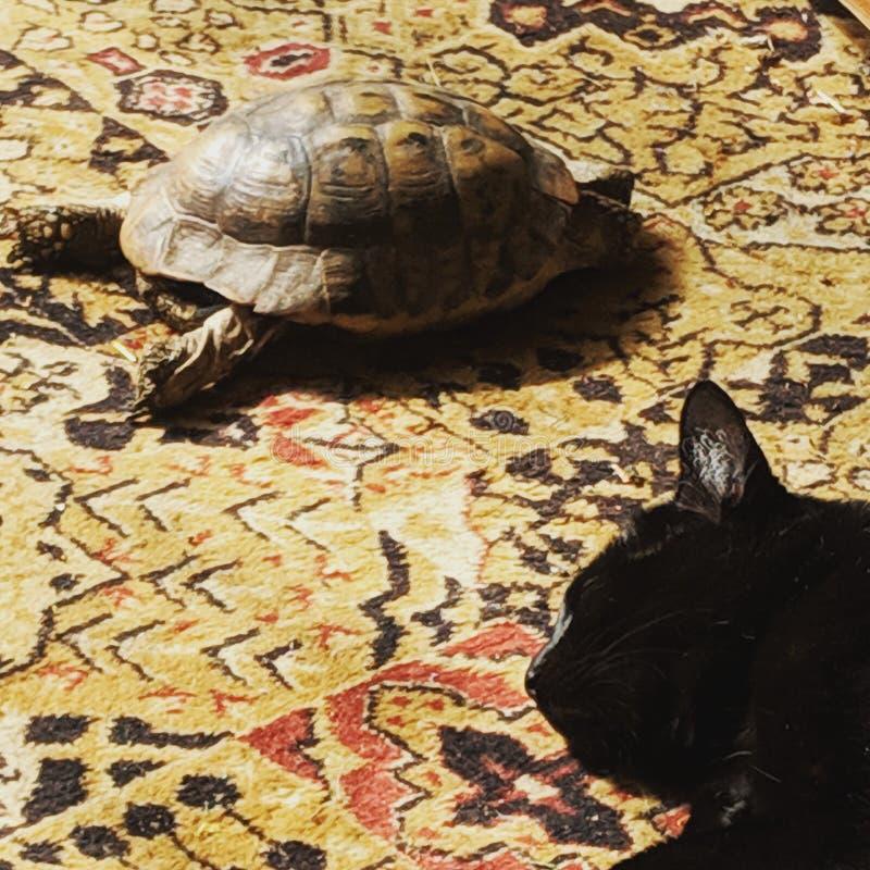 Schildpad en kat royalty-vrije stock foto's