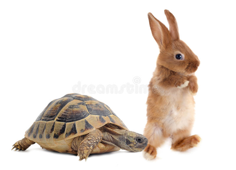 Schildpad en konijn royalty-vrije stock fotografie